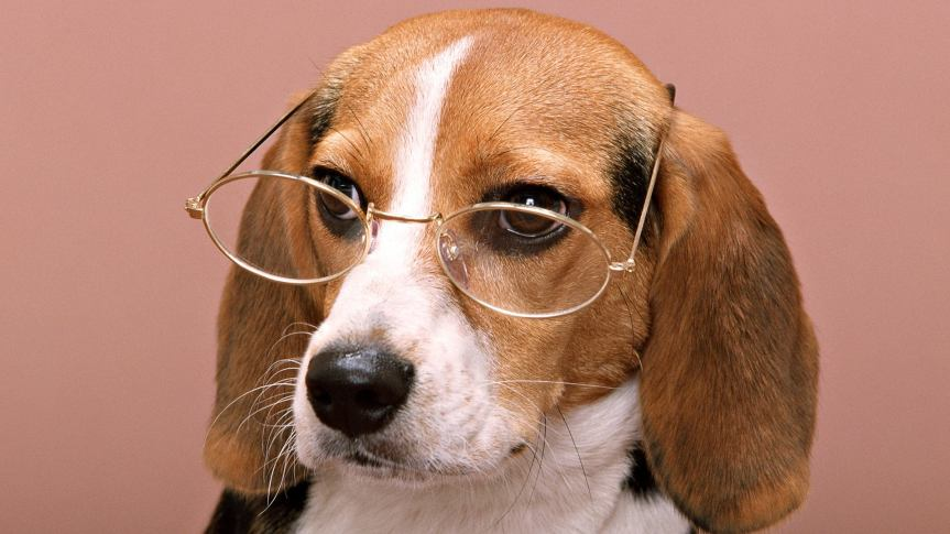 Beagle2glasses