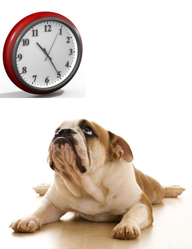 Can Your Dog Tell Time?
