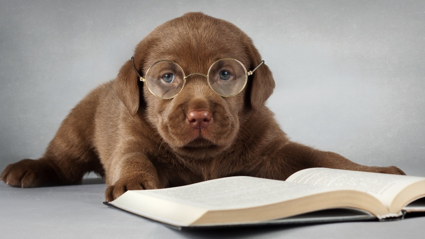 labrador-puppy-with-glasses-dog-animal-animals-2560x1440-wallpaper133792