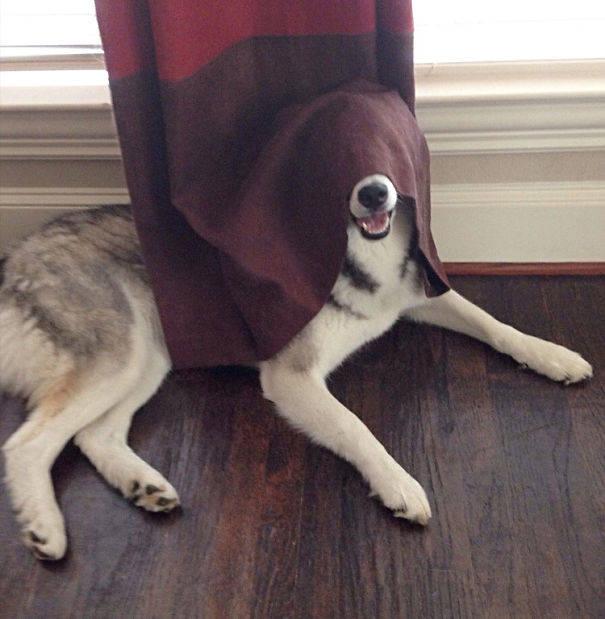doghide
